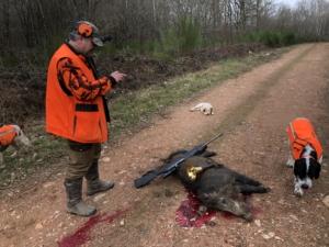Fermeture de la chasse au sanglier   Chasse des Etangs